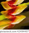 Heliconia Rostrata Abstract 42494407