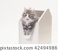 猫 猫咪 小猫 42494986
