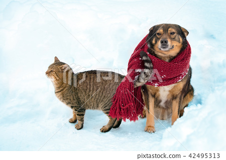 Portrait of a dog and cat outdoor in snowy winter 42495313