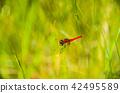 곤충, 벌레, 잠자리 42495589