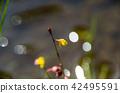 식충식물, 산야초 42495591