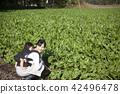 同時保持嬰兒家庭園藝 42496478