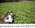 同時保持嬰兒家庭園藝 42496479
