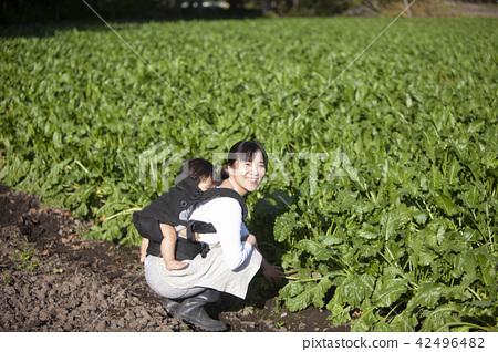 同時保持嬰兒家庭園藝 42496482