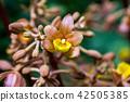 산야초, 곤고산, 콘고산 42505385