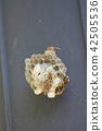 맞아요 쌍살벌 아과의 둥지 07 42505536