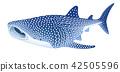 고래상어, 상어, 생선 42505596