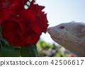 경로 밸리 흰 족제비 (흰둥이) 42506617