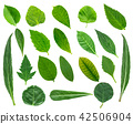 Collection of  leaves 42506904