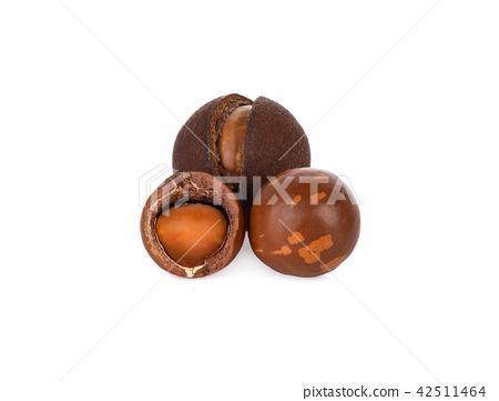 Macadamia nuts on white background. 42511464