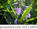 산야초, 이부키야마, 이부키 산 42511809