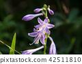 산야초, 이부키야마, 이부키 산 42511810