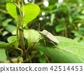 곤충, 벌레, 자연 42514453