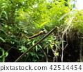 곤충, 벌레, 자연 42514454