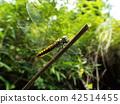 곤충, 벌레, 자연 42514455