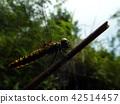 곤충, 벌레, 자연 42514457