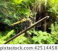 곤충, 벌레, 자연 42514458