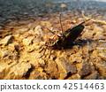 곤충, 벌레, 자연 42514463