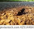 곤충, 벌레, 자연 42514464