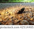 곤충, 벌레, 자연 42514465