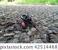 곤충, 벌레, 자연 42514468