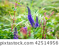 산야초, 이부키야마, 이부키 산 42514956