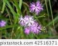 산야초, 이부키야마, 이부키 산 42516371