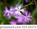 산야초, 아키노나나쿠사, 가을의 대표적인 일곱 가지 나물 42516372