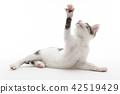 cat pussy kitty 42519429