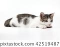 cat pussy kitty 42519487
