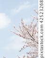 벚꽃 42523268