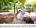 Child feeding wild deer at zoo. Kids feed animals. 42524596