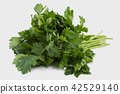 Raw green parsley isolated on white. 42529140