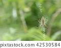 긴 호랑 거미 암컷 09 42530584