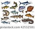 fish, seafood, sketch 42532581