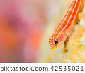 Tatejima蛇 42535021