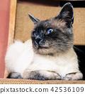 adorable cat ear 42536109