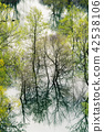 Trees reflected in the waters of the Skadar Lake 42538106