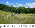 夏天 夏 大农场 42545336