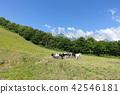 북쪽 능선 고원 : 방목 된 소들 기타 아즈미 군 하쿠바 무라 42546181