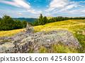meadow, forest, hillside 42548007