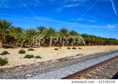 美國·棕櫚樹種植園和軌道 42548208
