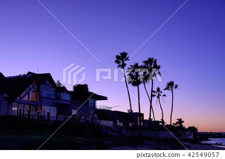 在黃昏的棕櫚樹 42549057