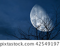 half moon back silhouette tree and night sky 42549197