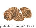 芋頭 水彩 水彩畫 42549536
