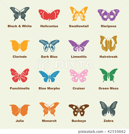 butterfly elements 42550662