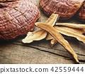 Ganoderma Lucidum - Ling Zhi Mushroom 42559444