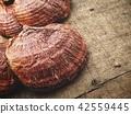 Ganoderma Lucidum - Ling Zhi Mushroom 42559445