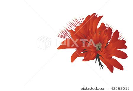 Prefectural Flower Simple Okinawa Deigo 42562015