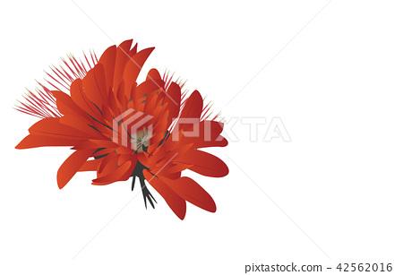 Prefectural Flower Simple Okinawa Deigo 42562016